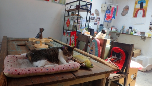 One of the numerous cat cafe
